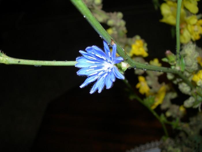 azzurre_DSCN1502